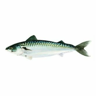 Fish Pillow - Atlantic Mackerel 60cm